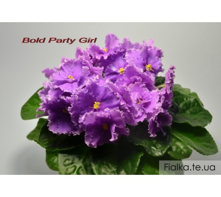 Bold Party Girl